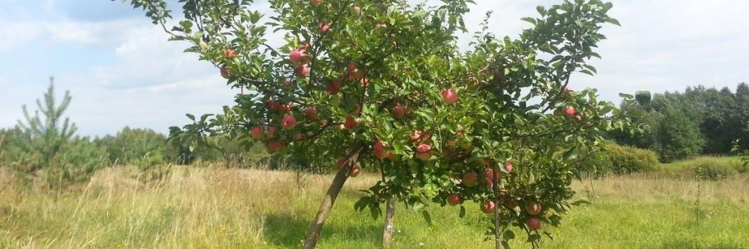 Apie ilgalaikio įdirbio vaisius