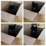 Idėja besirūpinantiems kačių sveikata