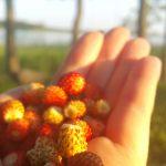 Apie Jaunaties sėją ir derlių
