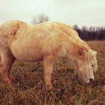 Susipažinkite: Kutas ir Arklių slėnis
