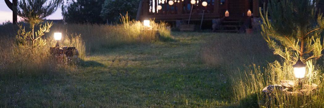 Laukinių pievų vasara: nauji gyventojai mano kieme